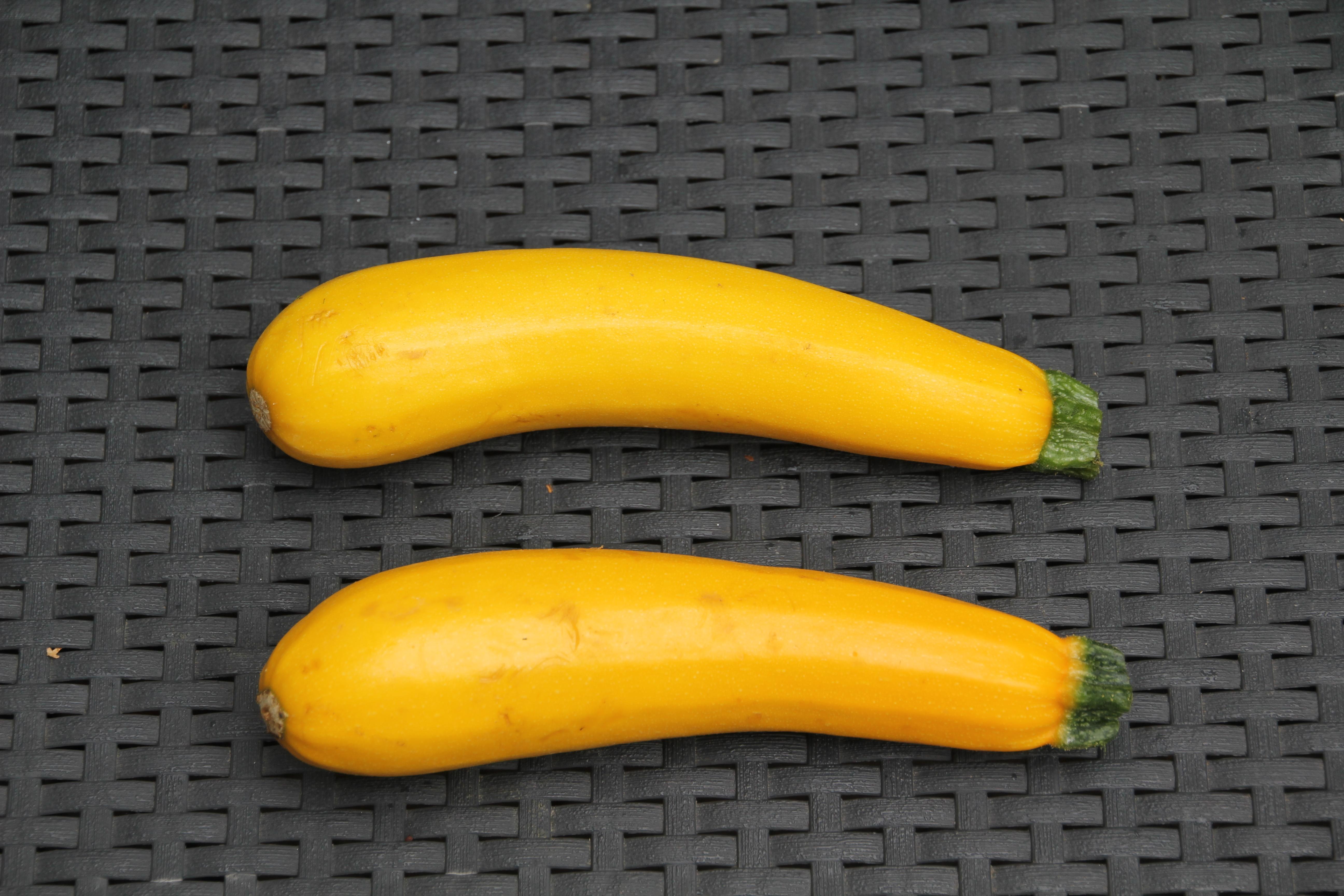 courgettes jaunes (1)